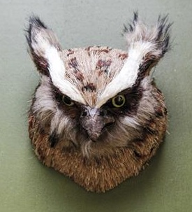 Owl Trophy