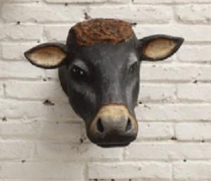 barnyard cow