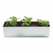 foodie garden kit- basil o holic