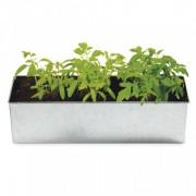 foodie garden tomato takeover