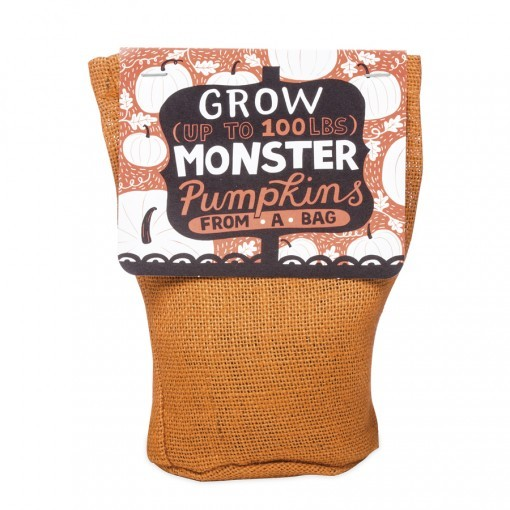 monster bag plants - pumpkins