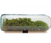 recycled wine terr Moss