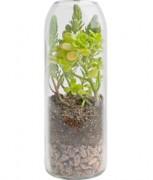 recycled wine terr-Vert Sedum