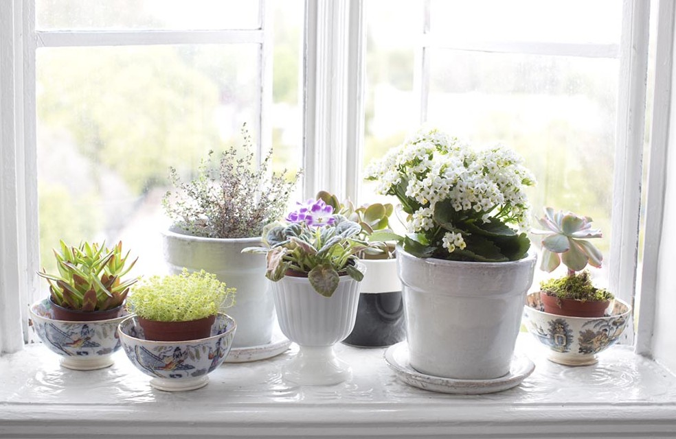 thePHAGshop_breathe_easy_windowsill_garden 1