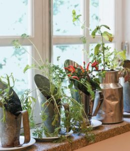thePHAGshop_breathe_easy_windowsill_garden 2